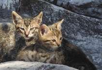 Katzen Agora