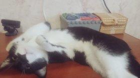 Katze rückenlage