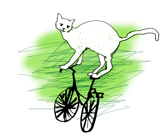 fahrradkatze