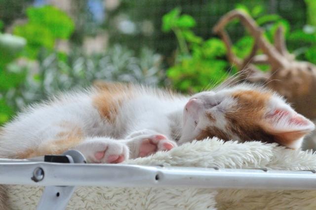 Kätzchen auf dem Wäscheständer